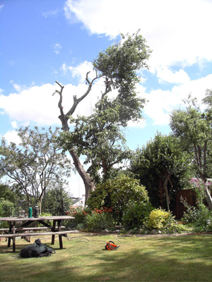 devon & south west tree surgeon and landscaping poplar
