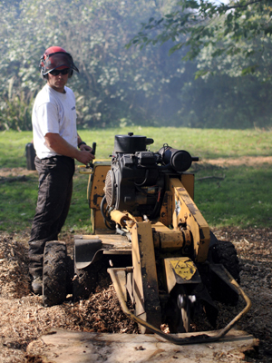 landscaping & tree surgery south west, devon, stump grinding