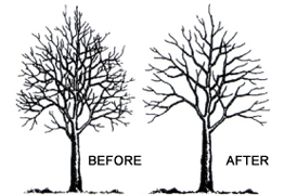 logs, landscaping, fencing & decking tree-pruning