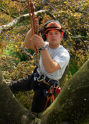 south devon tree surgeon, stump removal, logs, aerial-assess thmb
