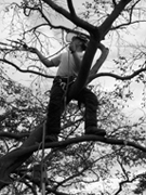 south devon tree surgeon, stump removal, logs, aerial-assess
